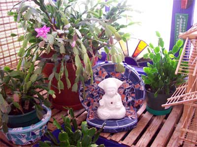 Little Buddha shrine under the Christmas Cactus