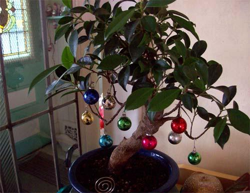 bonsai-wballs