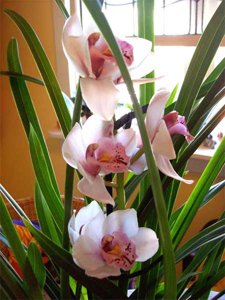 orchid-flwrs1