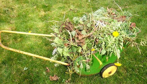 weed-wagon