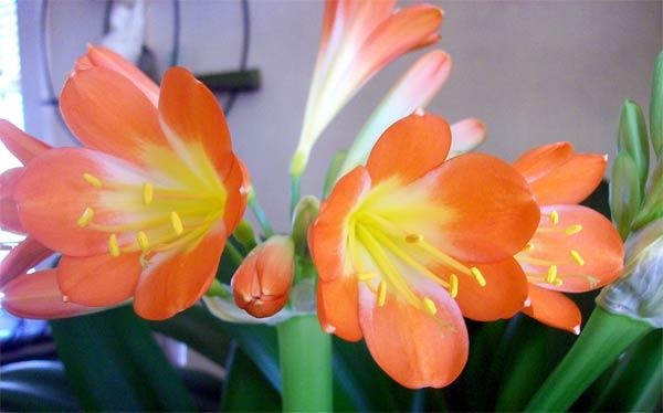 bloom-35
