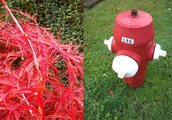 hydrantshrub