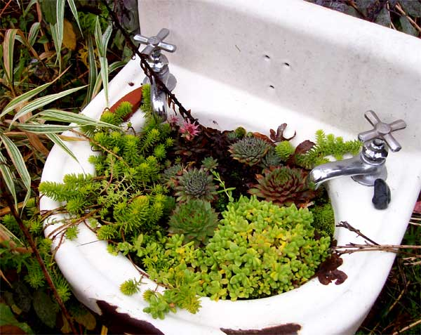 sink-of-succulents