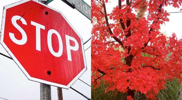 stopredtree1