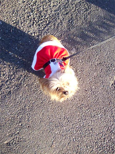santadog-looking-up