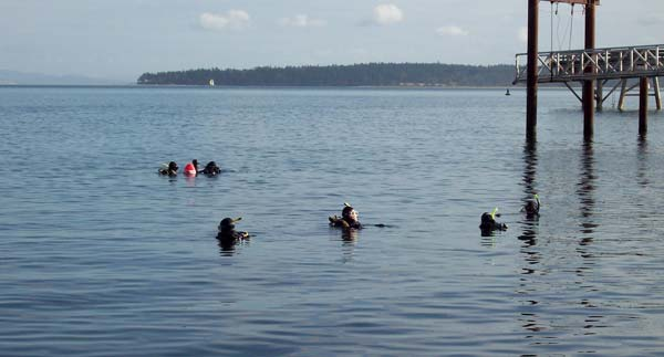divers-at-beacon-ave-beach