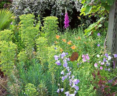 The foxglove self seeded and the Humming birds love it.