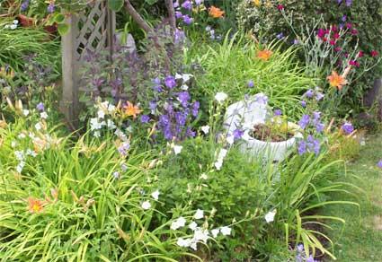 A bit of the serendipitous garden