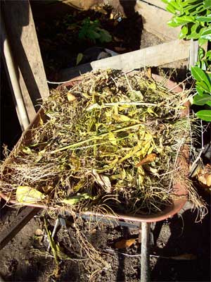 The pre-composted weeds