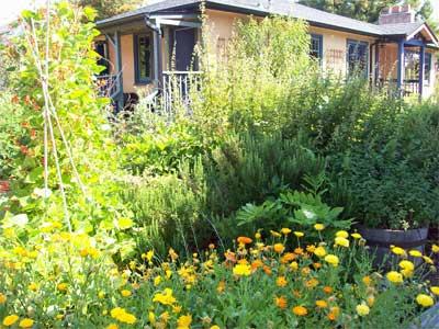front yard veggie abundance
