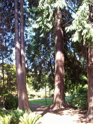 Emily's trees
