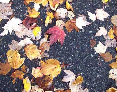 leaves normal
