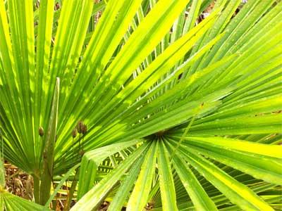 palm-nrml