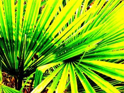 palm-phtoshp