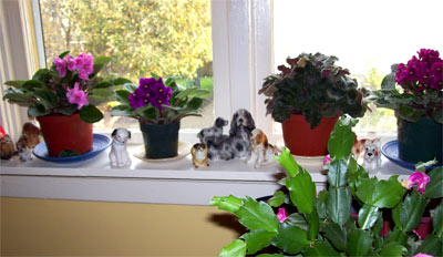 window-sill1