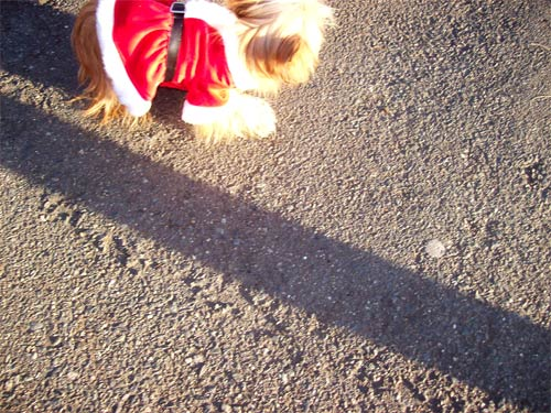 santadog-out-of-pic
