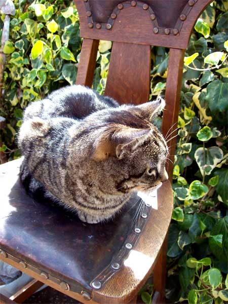 cat-on-chair2