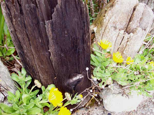 driftwood-fence1