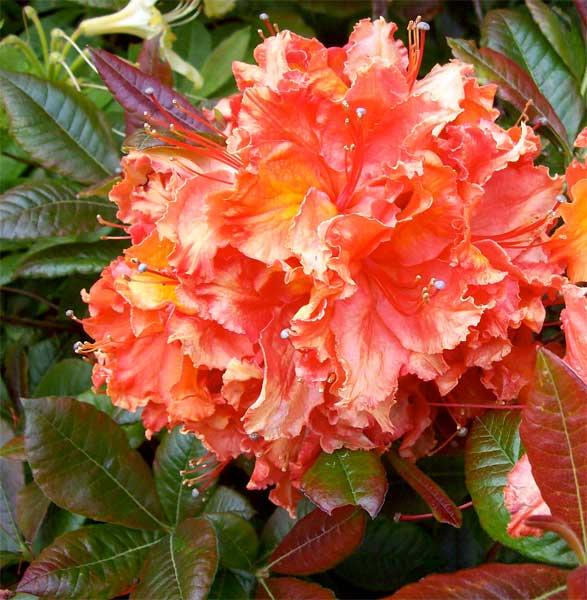 hot-orange