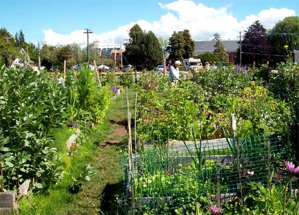 comm-garden