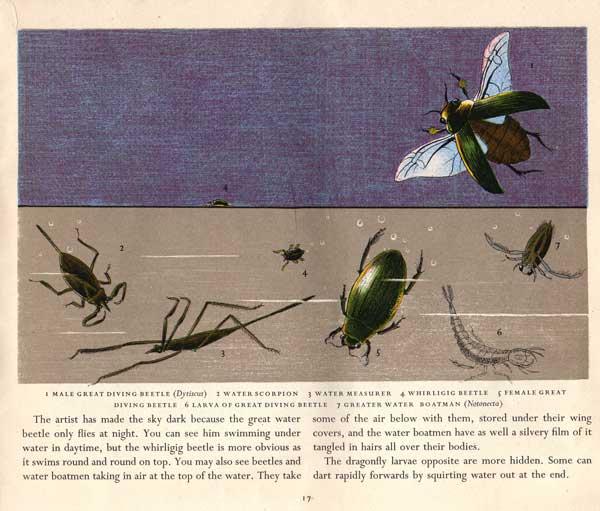 divng-beetles-on-purple