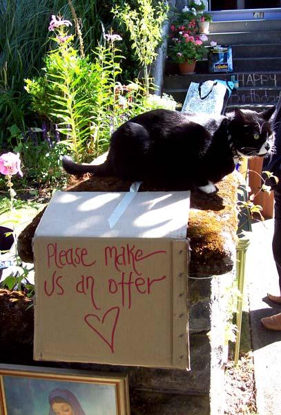 cat-on-offer
