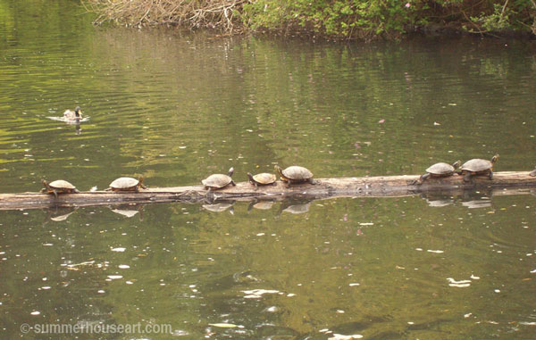 turtles-sunning